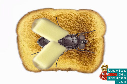 butterfly, la mosca de la mantequilla