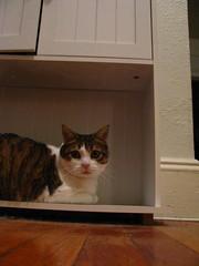 tuna in odd places (one light) Tags: catnipaddicts