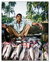 Fish Market (charleebear) Tags: food india fish market kolkata bengal bangladesh calcutta mach bengali westbengal khana khabar bengalifood