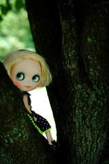 My Tree Lizard