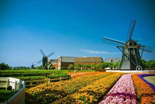 R0015645 : Kinderdijk #1