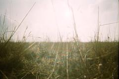 Field (James Tebbutt) Tags: england sun field countryside spring glare fuji superia snapshot flare vivitar t201