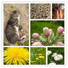 Spring UFOcat. (kotraport) Tags: cat spring may ufo kot maj wiosna catmoments