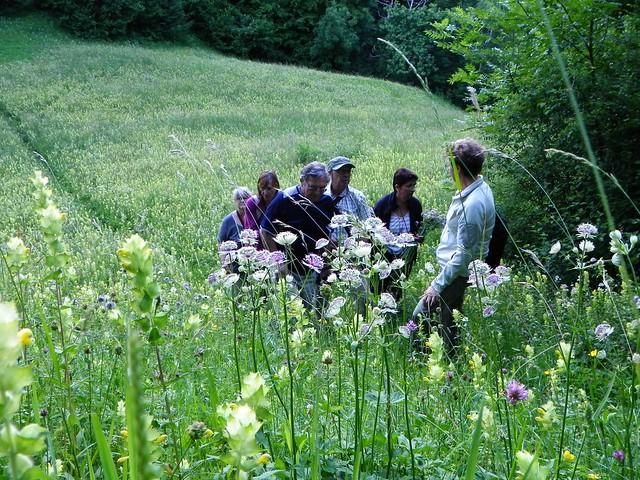 Botanique au lac de Montdessus 020