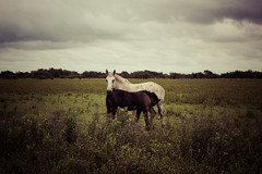 Madre ({ odradek }) Tags: horses caballos country mother son vida campo nublado madre maternidad potrillo