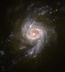 Starburst Galaxy NGC 3310 (Hubble Heritage) Tags: heritage spiral galaxy astronomy ursamajor hubble hst wfpc2