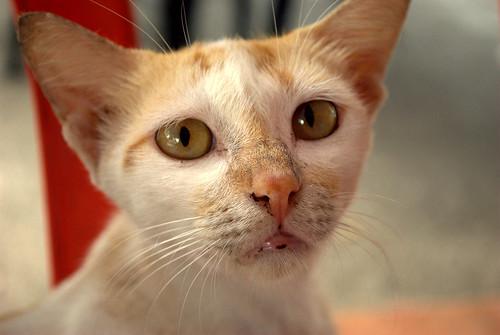 Stray cat-beggar