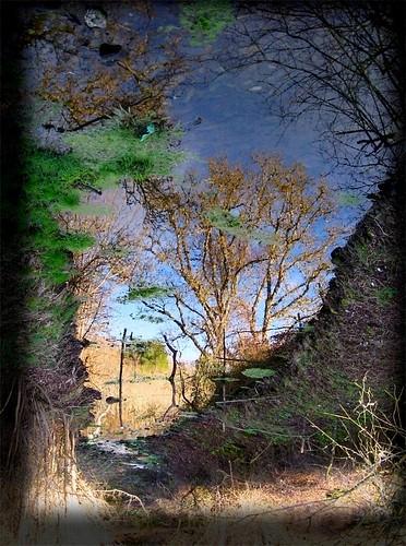 El árbol del agua