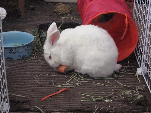 gus and carrot 2