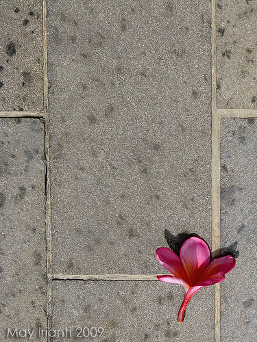 A Flower in The Stone