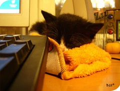 Mushu en el ordenador (aunqtunolosepas) Tags: pet cats baby pets cute love animal animals cat pc kitten feline bea little sleep dream adorable kitty kittens gatos cutie sleepy tuxedo gato cachorro dreams kitties gata felinos felino bebe animales lovely cuteness gatitos dormir mascota mascotas zzz pequea peque gatita sueo dormido cachorra mushu durmiendo dormida soar cachorrito soando dreamings kissablekat aunqtunolosepas catnipaddicts