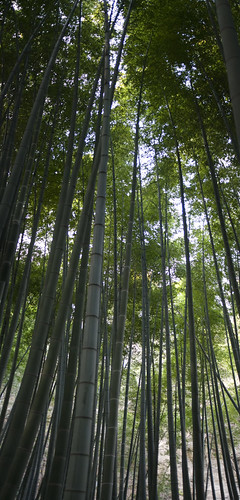 bamboos_height