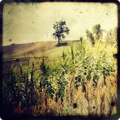 Countryside and the lonely tree (Mr.PartyHut ) Tags: tree texture nature countryside country campagna solo lonely albero soe appennino ttv montefalcone desolato mywinners theunforgettablepictures concordians proudshopper marcomatteucci awardtree