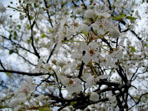 2009-02-14_flower3.jpg