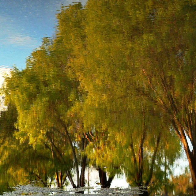 Lake Balboa Reflections