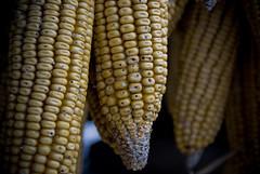 """2ª KDD """"Quedadas Vigo"""" - 07-03-2009 (DNS Fotografía) Tags: minolta sony dani galicia 300 alpha kdd tamron pontevedra vigo maiz quedada maxxum combarro mazorca poio nidazo"""
