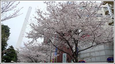 池袋の桜もほぼ満開