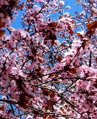 OMFG Blossoms!