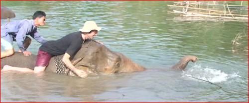 elephantwash2