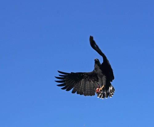 blackhawk2