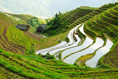 growing rice (marin.tomic) Tags: china travel mountain green water rural asian nikon asia rice guilin hill chinese terraces scenic hut steep gettyimages riceterraces guangxi longsheng d40