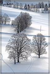 In a winter's day ... My Snow's rackets steps. (Izakigur) Tags: winter snow schweiz switzerland nc nikon bravo europa europe flickr suisse suiza swiss feel lac ne jura neige d200 nikkor svizzera neuchatel neuchtel lepetitprince ch  neuenburg 105mm chauxdefonds romandie suisseromande  lachauxdefonds myswitzerland nech nikond200 nikon105 nikkor105 nikkor105mmf28vr 105f28 superaplus aplusphoto cantondeneuchtel bcwinters nikkor10528vr nikon105mmf28gvrmicro nikon10528vr nikon105mmf28gvr izakigur vanagram nikon105mmf28micro cantonofneuchatel montcornu imagesforthelittleprince racketsshoes izakigur2009 mygearandme izakigurneuchtel izakigurjura nikonvr10528