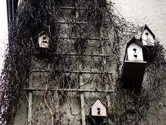 Philadelphia birdhouses (moocatmoocat) Tags: bw house bird philadelphia wall square vines birdhouse well behind fitler mostlybw withabitof colorileft
