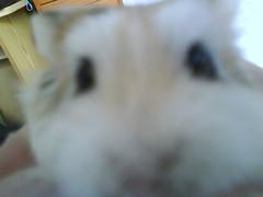Close up (ikieran97) Tags: hamsters jotoh