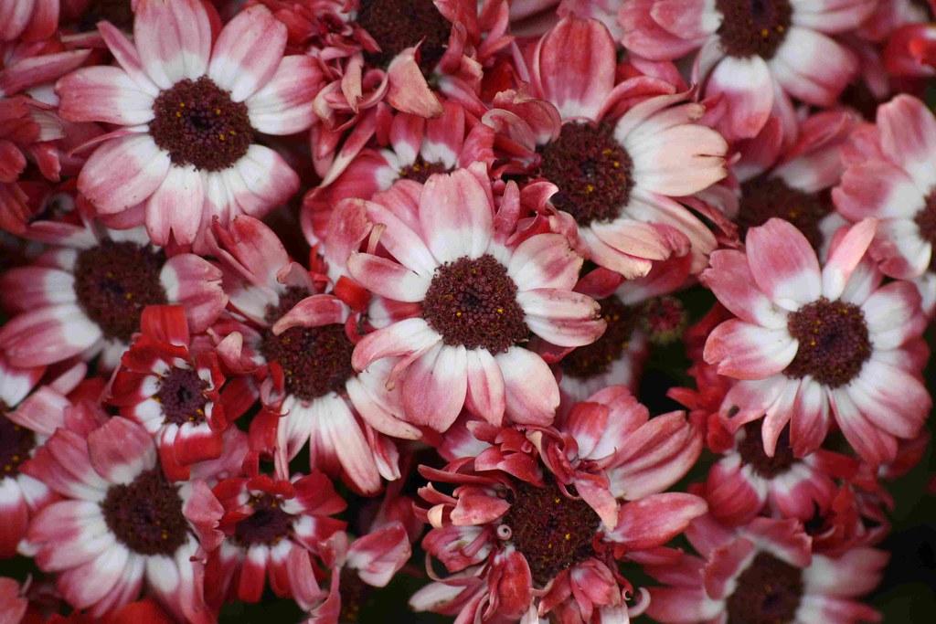 Flores Jardín botánico Akureyri
