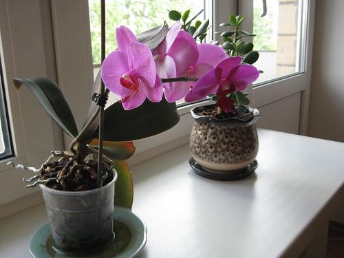 4 Flowers!