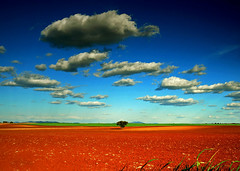 alone (carlos jm) Tags: blue sky brown tree nature azul clouds landscape nikon paisaje cielo lonely d200 minimalism marron extremadura encina aebol