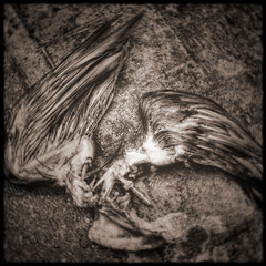 Clarence screwed the pooch (Simon Crubellier) Tags: city uk england london westminster sepia canon square dead wings pigeon ixus regentscanal simoncrubellier ixus70