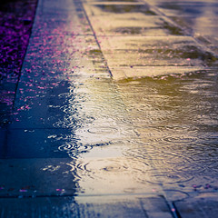 120.365 - Hopeless Romanticism (Josh Liba) Tags: love wet rain project square 50mm drops nikon poetry sad ripple f14 explore romantic 365 tones 1x1 hopeless yaaaay d90 explored 120365 joshliba itsmuuuchmoreinterestinglarger joshlibacom