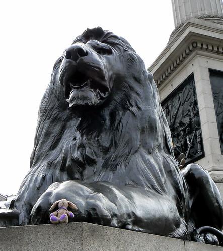 Buttonms & Nelson's Lion