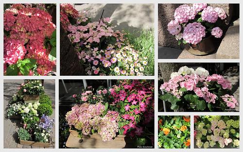 Kukkia Bulevardilla by Anna Amnell