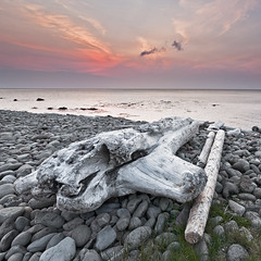 Driftwood at sunset - Iceland (Arnar Bergur) Tags: ocean wood sunset sea water clouds canon iceland northwest stones shoreline driftwood shore 5d gras arnar 1740 arneshreppur nordurfjordur