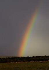 Rainbow, Maasi Mara, Kenya