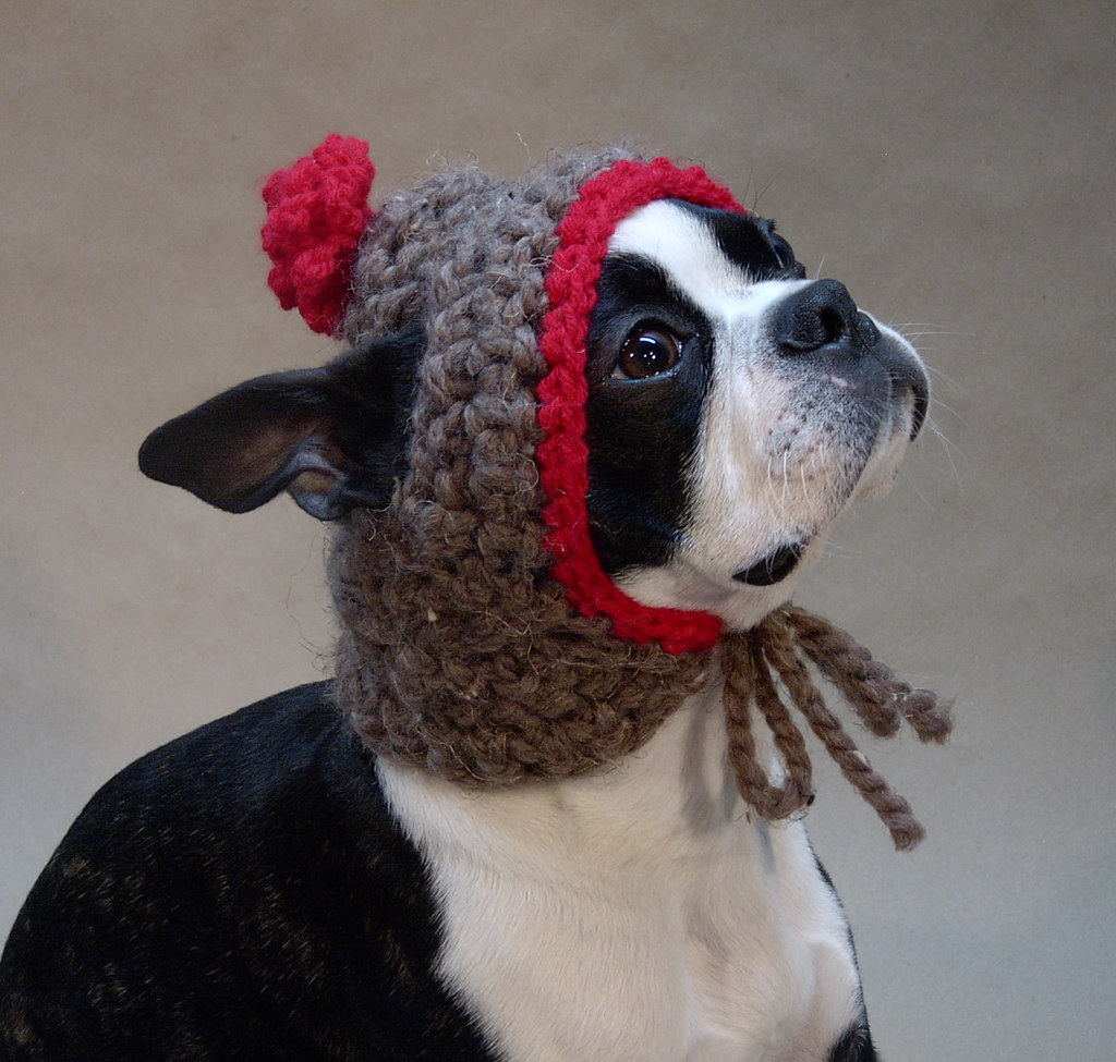 Dog Hat Knitting Pattern : The Worlds Best Photos by Beantown Handmade - Flickr Hive Mind