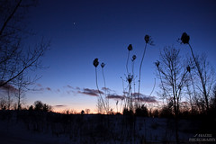 Winter Solitude (~Stingrays~) Tags: winter guelph arb