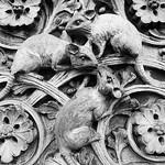 Museum Mice