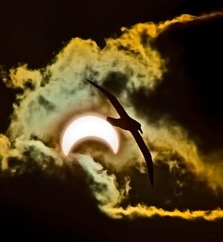 Eclipse over Gough Island...