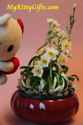 Hello Kitty watching Daffodils during Chinese New Year 2009