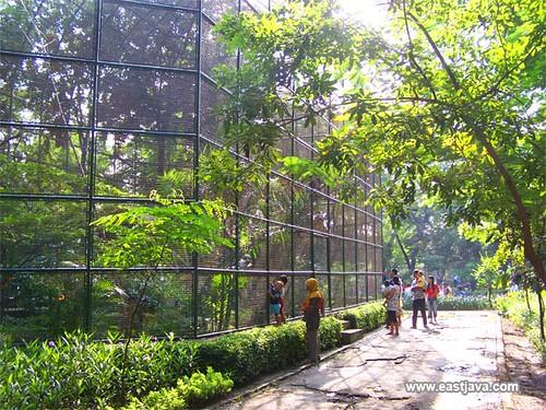 Kebun Bibit Surabaya (Bird Big Cage) - Surabaya - East Java