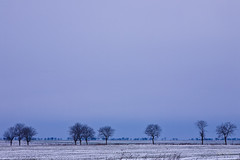 Lines of trees (Raoul Pop) Tags: trees winter snow lines canon landscape flickr seasons flat earth ground romania fields smugmug plowed canoneos5d dobrogea googlephotos hazysky cogealac