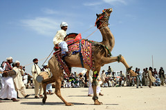 Camel Dance (Iqbal.Khatri) Tags: show pakistan art colors race magazine dance travels desert dancing jeep rally culture camel punjab prancing cholistan bahawalpur canon400d travelandplaces iqbalkhatri cameldance
