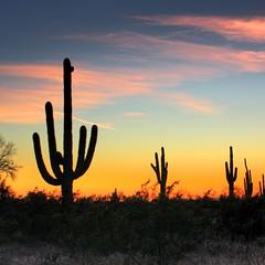 Cactus Sunset (bekinaz) Tags: sunset arizona cactus silhouette colorful desert saguaro hdr mesa photomatix platinumheartaward