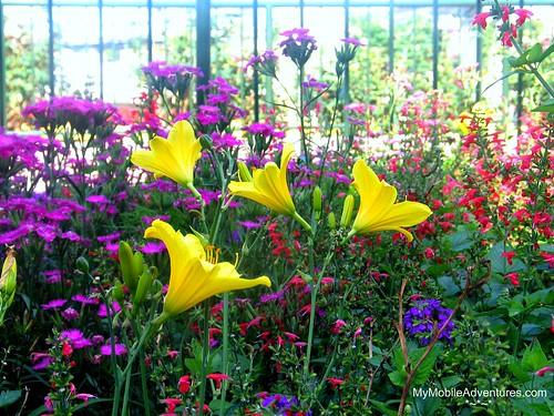 IMG_5866-WDW-EPCOT-FandGFest-garden