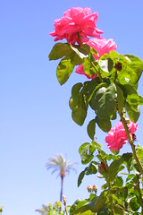 I <3 this picture!!! (TaylorH.) Tags: arizona flower rose az canond30