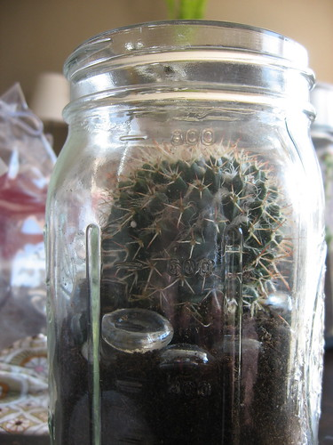 Sug's Sweet Little Terrarium