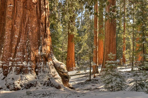 Photo of the Day: Mariposa Grove by Robert Pearce